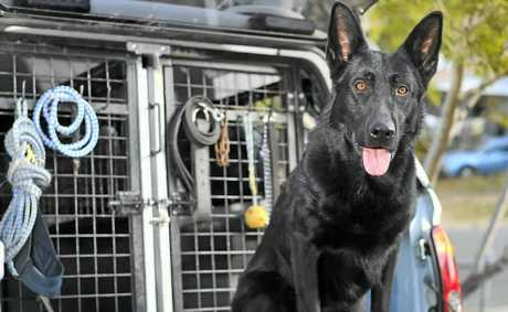 Police dog Ox is back on all fours after being attacked.