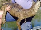 Steve Brooks from the Department of Agriculture, Fisheries and Forestry was stunned when he caught a freshwater crocodile in Mundubbera, west of Maryborough.