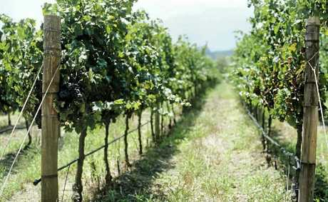 Less vineyard plantings resulted in less round post sales.