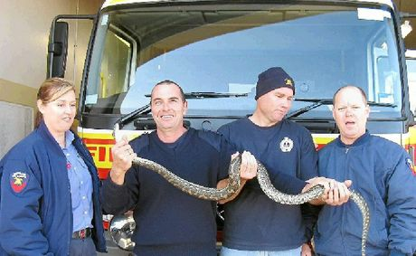 Gympie Fire and Rescue&#39;s Brenda Lewis, Grant Nelson, Tony Wildman and Wayne Westlake removed a 1.8m snake from a Gympie resident&#39;s toilet on Wednesday evening.