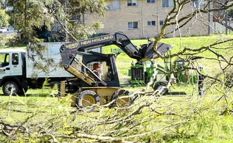 A Bobcat clears trees for Grafton's Community Garden in Queen Street.