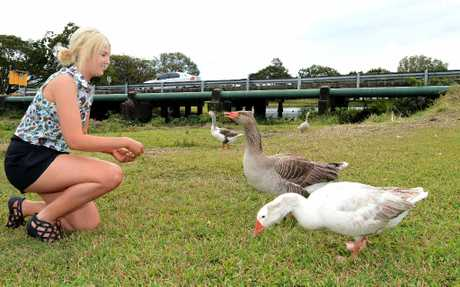Elly Mathewson is concerned at the number of geese that are dying on roads near The Gooseponds.