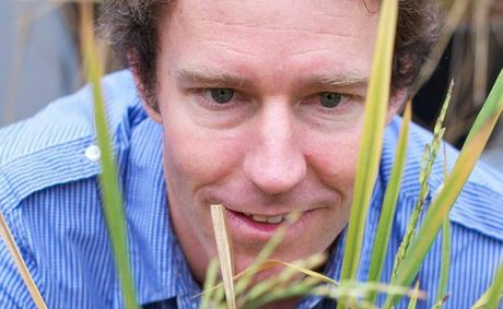 Dr Terry Rose's research could help rice farmers save billions in fertiliser costs.