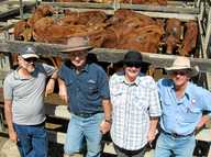 SULLIVAN Livestock yarded 1446 cattle at their Gympie Cattle Sale held Monday June 24.