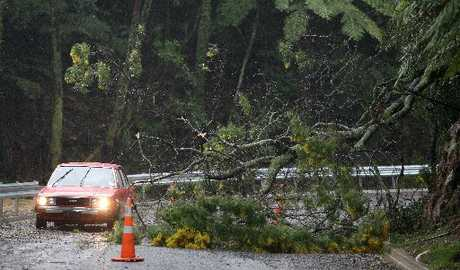 Strong winds caused tree damage, closing half of McLaren Falls Rd yesterday afternoon.