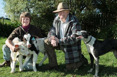 Wendy Milne and Bruce Worsnop breed Belgian Blue cattle and Lincoln sheep, and are trialling cross-breeding their sheep with Gotland pelt and Arapawa sheep.