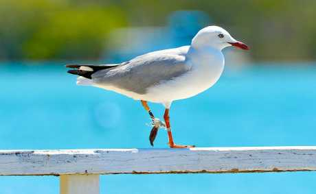 Michael Garnham snapped this seagull with fishing line wrapped tightly around its legs.