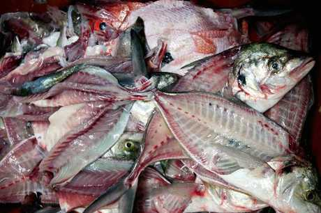 The Fresh Fish Market has been fined for illegally obtaining large quantities of fish. 