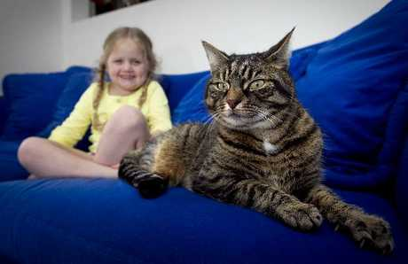 CAT OUT OF THE BAG: Scarlett Hayes, 4, is keeping an eye on her aunt and uncle's cat Chiefie.