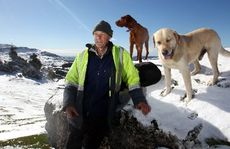 HBT123762-17.JPG Murray King from Rock Station, Te Pohue, with his dogs.