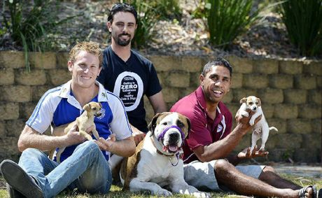 Ipswich Rugby League A -grade captains Blake O'Loan (Brothers) and Andrew Walker (Fassifern Bombers) and Animal Welfare League operations manager James Taylor cuddle up to Ty, a bull arab cross and two new jack russell puppies.