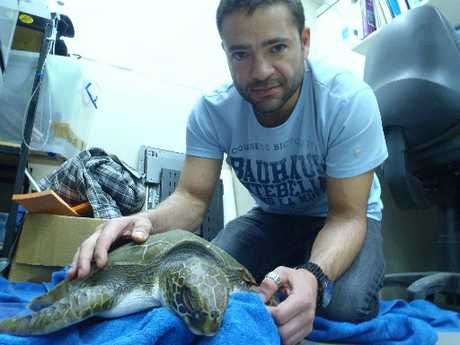 Researcher Dan Godoy with the green turtle that died this week.