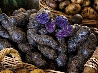 Maori potatoes require the same conditions as regular potatoes to grow.