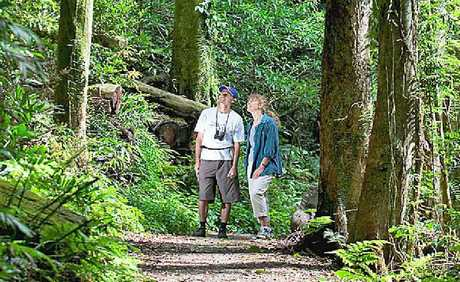 RAINFOREST WALK: Guided tours with NPWS rangers will take you to some of the most beautiful parts of the Northern Rivers.