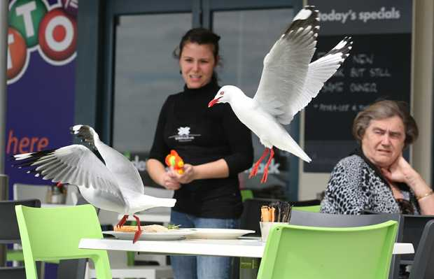 Luana Silva of the Sidetrack Cafe tries to get rid of pesky seagulls on the cafe's patio using a water gun.