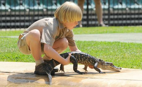 Robert Irwin picks up a baby alligator at Australia Zoo.