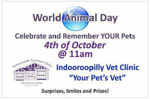 World Animal Day on October the 4th.  Bring your pets (on leash, in a cage and ensure they are secure) and celebrate - Bless your Pets Day.