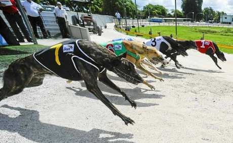 A strong 12-event program at Grafton today should have plenty to attract the punters.