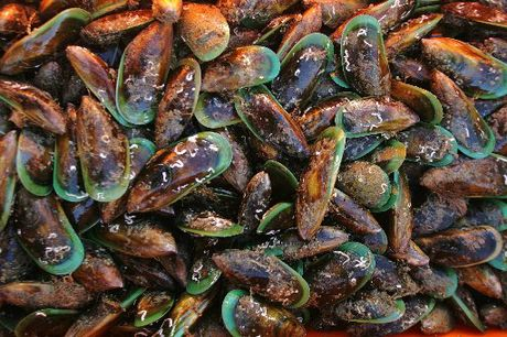A mussel farm has been given the green light in the Far North.