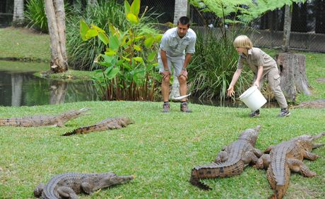 Robert Irwin feeding the freshwater crocodiles at Australia Zoo for the first time publicly.