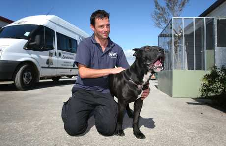 The SPCA&#39;s Jason Blair pictured with Nero a year ago. The dog, which had its ears and tail cut off as well as a nasty wound on its neck. 