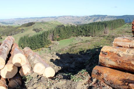 Both forestry and farming play important parts in New Zealand's economic growth.