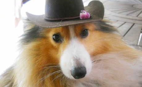 TOO CUTE: Entries are flooding in for The Queensland Times Pimp Your Pet competition including Bundy.