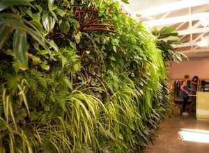 A green wall similar to this one inside an Auckland hair and beauty salon will be a feature of the Garden & Artfest's rooftop garden.