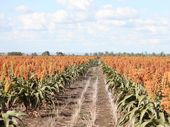 Valuable cropping land such as this Central Queensland block, could still be threatened by an underground coal mine, according to landholders. 