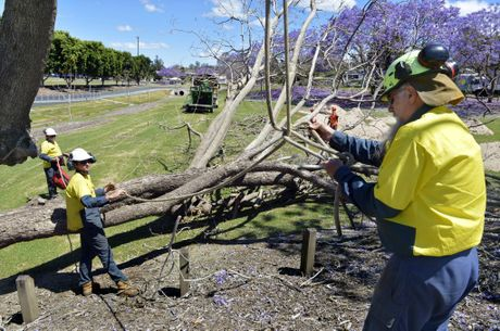 Council workers begin felling a dead jacaranda tree on Brisbane Terrace in Goodna. Part of the tree came down during Friday&#39;s high winds. Photo: Claudia Baxter / The Queensland Times