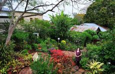 OPEN ARMS: Deborah Sutton shows off her Thorn St garden, Adenfield, which will open to the public at the weekend.