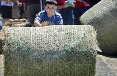 MAKING HAY: Zachary Pennell, 9, shaves 10 seconds off his best time in the hay bale sprint.