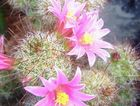 In late September and into October, many types of cactus flower profusely.