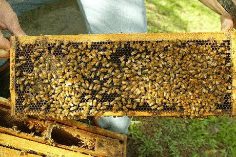 A man has avoided jail after receiving 85 beehives.
