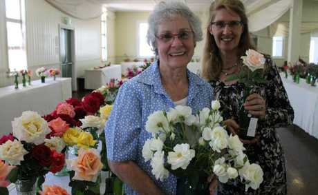 BLOOMING GOOD: Judges Helen Murray and Anne Baster check the roses for freshness and shape at the Warwick Spring Flower Show. Photo: Shannon Newley / Warwick Daily News
