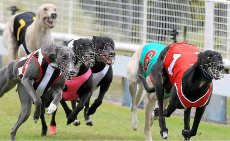 Greyhound racing will remain at Border Park after plans to move it to Murwillumbah fell through.