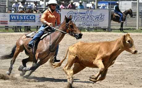 Springsure rider Toni O'Neill shows her style in the ladies campdraft at the Warwick Showgrounds.