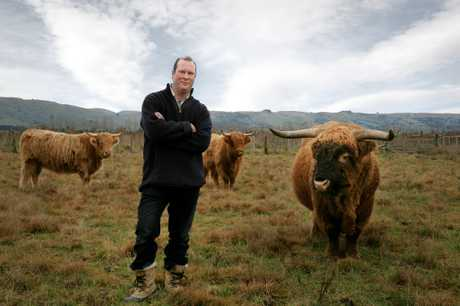 HORNING IN: Angus Thomson and his very special Highland cattle, above, and right, digging up cow-horn manure.