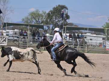C.G. Welding Ladies Silver Cup Campdraft on Monday at the Warwick Rodeo