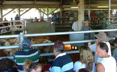 Lismore Saleyards