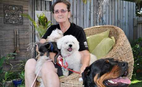 Jeanette Shepphard is hoping more foster carers will come forward for animals. Photo: Ashleigh Howarth / The Reporter