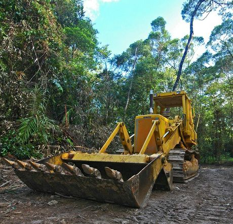 Byron-based Rainforest rescue's pictures of Daintree rainforest development