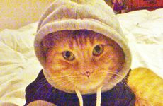 HOODIE: Leonie Hess's cat. Photo: Contributed