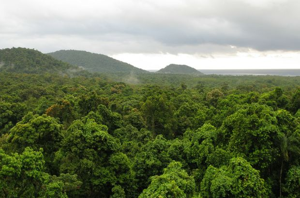 Parts of the magnificent Daintree rainforest in north Queensland are still open to development.