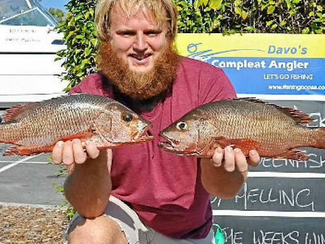 NOT BAD: Zeb Martin-Teale won the $50 Davo's Fish of the Week prize with the 42cm and 45cm mangrove jacks he caught around the back of the Sound.