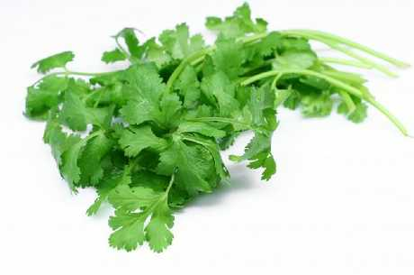 Coriander can bolt if it's not managed correctly.