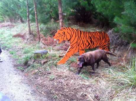 ANIMALS STOLEN: The tiger was part of the fun at Harakeke MTB Park.