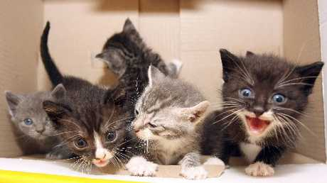 The SPCA rescues hundred of animals like these kittens every year and they need 'significant support', says Mayor Lawrence Yule.