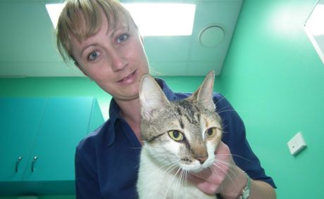 Pixie the cat will have no more kittens after her recent surgery. Councillors have voted unanimously to investigate amending local laws to stop the number of pets being euthanised.