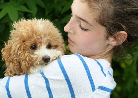 Grace Ritchie, 12, says adopted rescue dog Loulou is now one of the family.